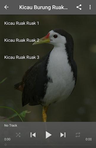 Download Suara Burung Ruak Ruak Apk Latest Version App By Labkicau For Android Devices