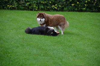 Photo: Mikkel er irriteret over at Ilo bare vil fjolle rundt med ham.