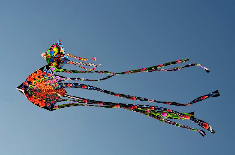 Kites di valeriaseveryn