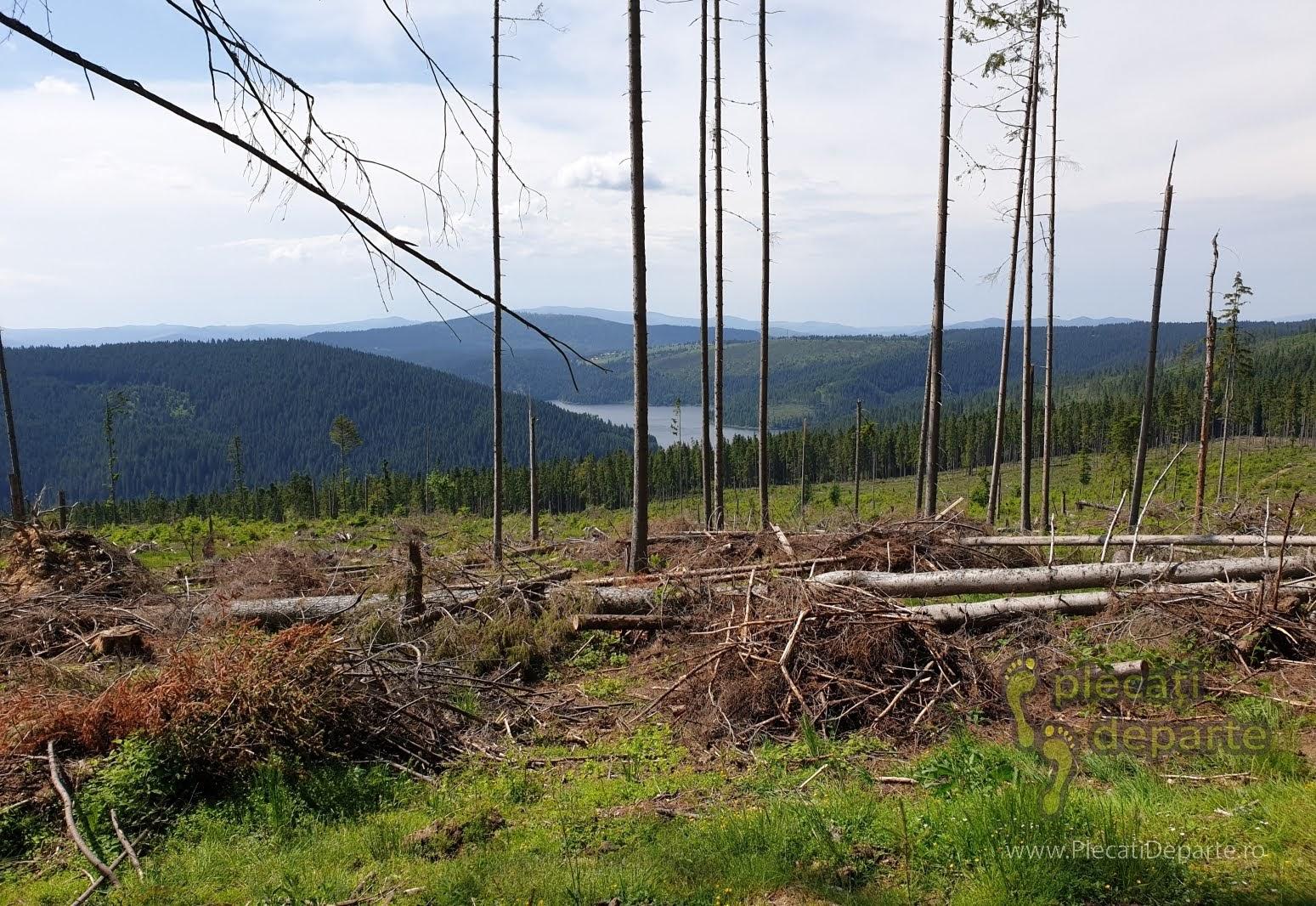 muntii apuseni obiective turistice tara motilor transursoaia trans-ursoaia dn 1R dn1R lacul belis taieri paduri defrisari lemn romanesc copaci taiati despadurire fond forestier
