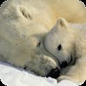 Polar Bear Live Wallpaper icon