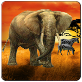 Safari Tour Slot