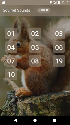 Squirrel Sounds by BirdDev (Google Play, United States
