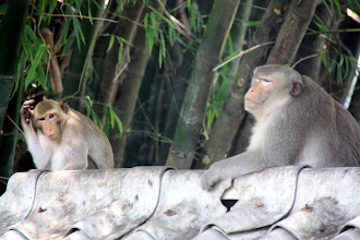 Photo: Day 327 - The Macaque Monkeys As I Moved Nearer to Them