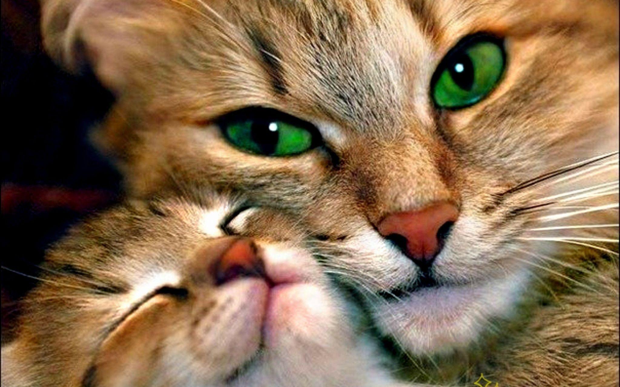 MEMORABLE CAT PORTRAIT for Remembering those we love