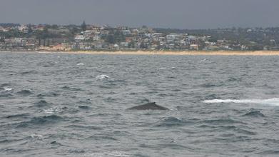Photo: Humpback whale