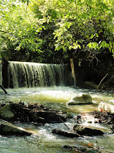 Photo: Green leaves over a waterfall at Eastwood Park in Dayton, Ohio.