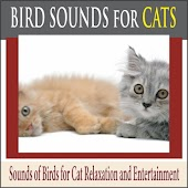 Bird Sounds for Cats: Sounds of Birds for Cat Relaxation and Entertainment