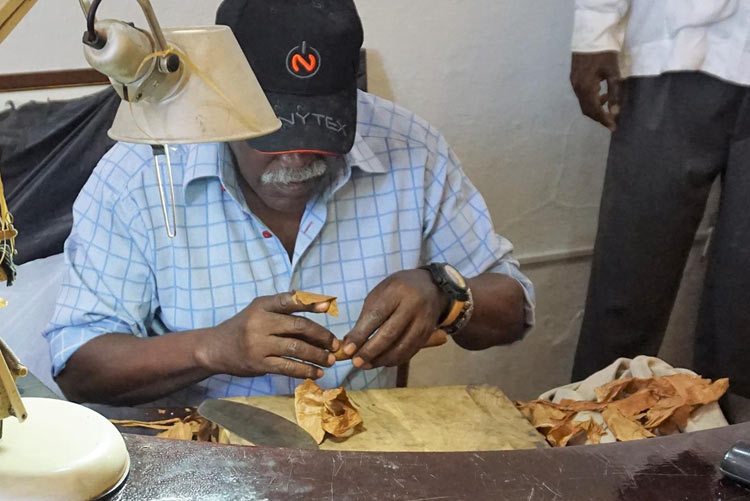 A Cuban man rolls a Cuban cigar