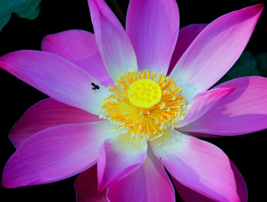 by Kosmas Jang - Nature Up Close Flowers - 2011-2013