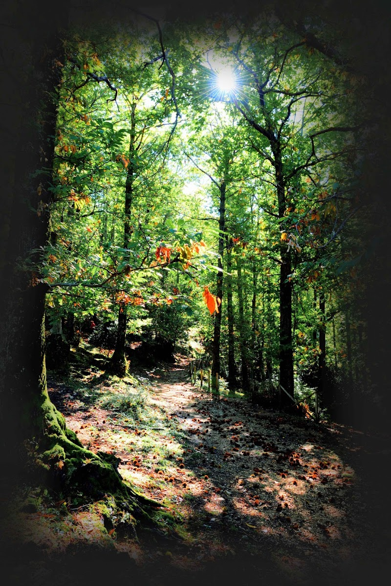 I colori del bosco di S-RAW PhotoArt