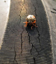 """Photo: Bug """"On The Road"""""""
