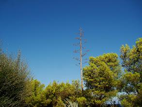 Photo: #017-Le village du Club Med de Sant'Ambroggio