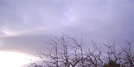 Photo: January 23: A Grey Afternoon