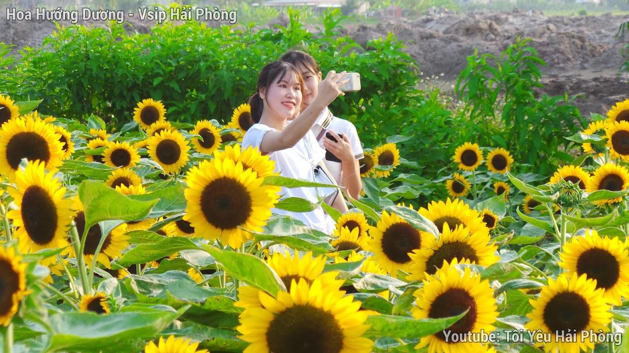 Vườn hoa Hướng Dương - Central Park Vsip Hải Phòng 4