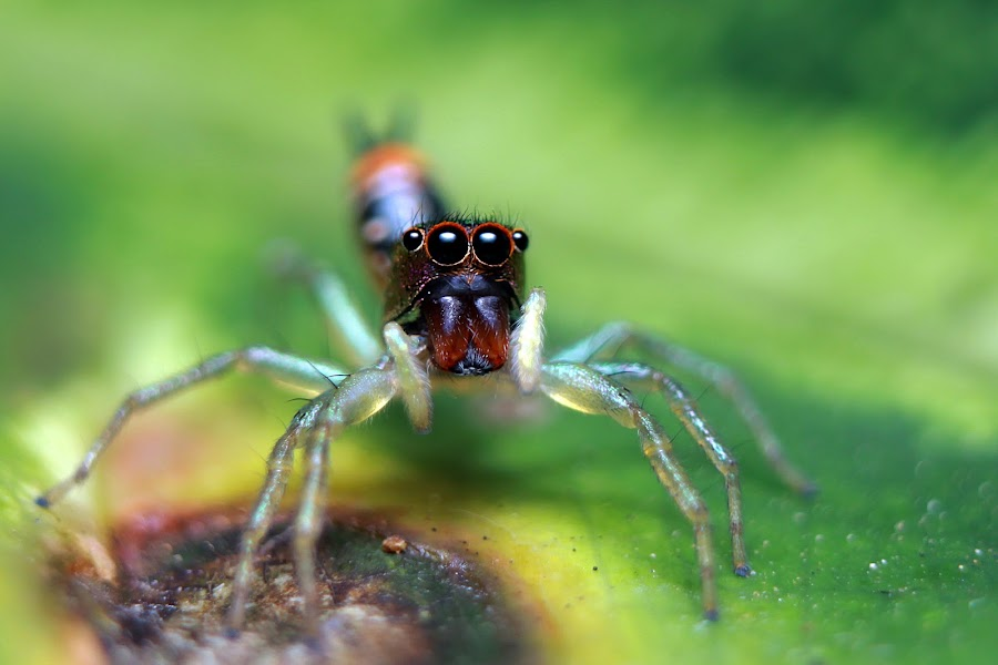 by Yogie Bastian - Animals Insects & Spiders
