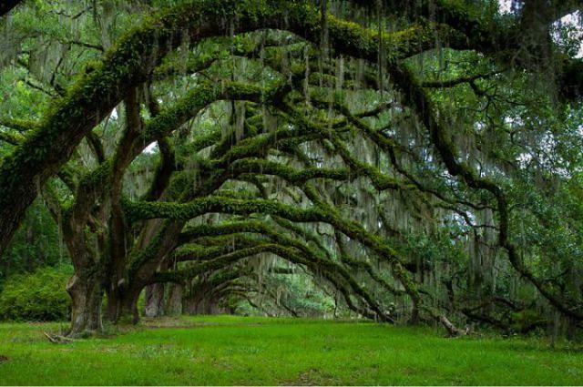 1_amazing-trees-16.jpg