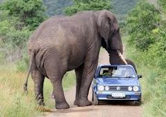 От слонов лучше держаться подальше