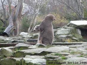 Photo: Aber Knut bleibt neugierig ;-)