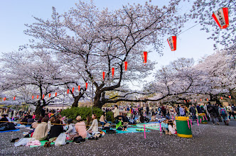 Photo: People enjoy Hanami (flower viewing) parties at Ueno Park in Tokyo, Japan