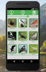 Bird and Animal soundboard