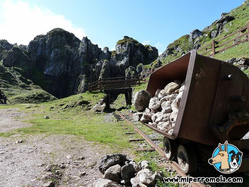 Senderismo con Perro en los Lagos de Covadonga, Asturias, Can de Palleiro, Border Collie