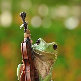 Play violin by Ian Bismarkia - Animals Other