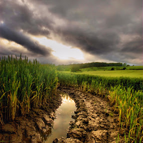 After the rain by BethSheba Ashe - Landscapes Prairies, Meadows & Fields ( field, clouds, mud, puddle, tracks, crop, rain )