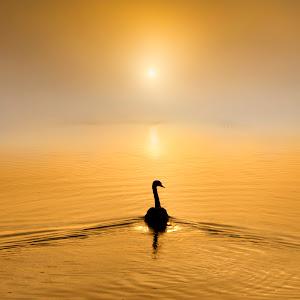 Golden Waters.jpg