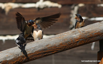 Photo: Sibling rivalry