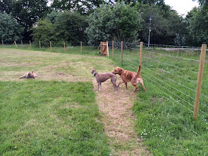 Photo: Annabel Whippet, Flora Whippet and Stan Lab
