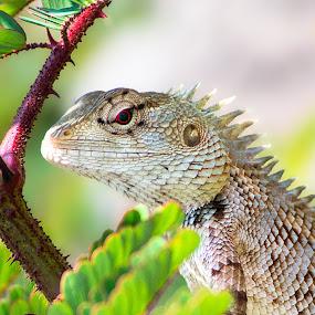 by Rajarshi Das - Animals Reptiles (  )