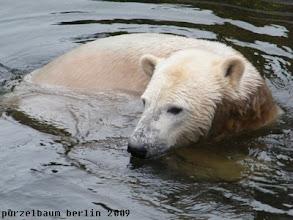 Photo: Knut nimmt erst einmal ein Bad ;-)