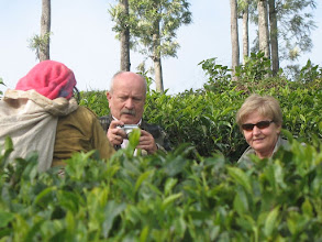 Photo: 7B220948 na plantacji herbaty
