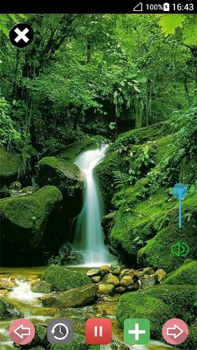 自然之声:放松森林音乐