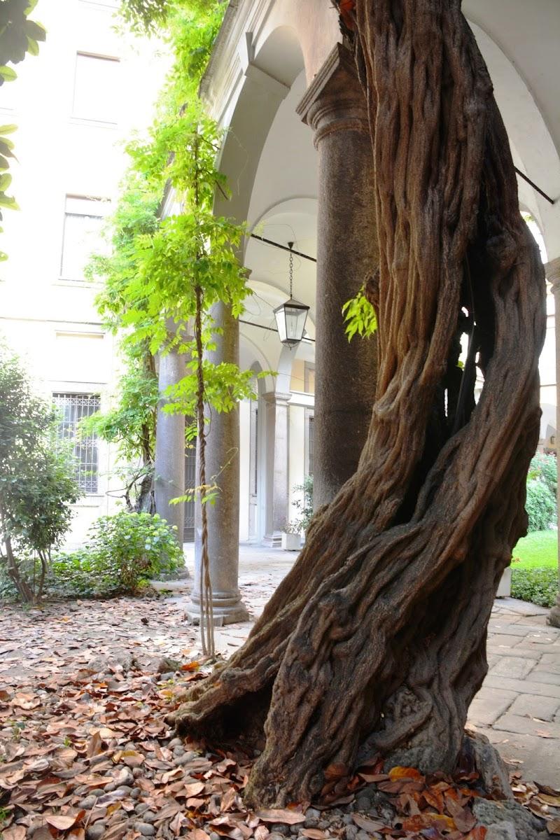 Colonna naturale e colonna umana di lando