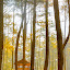 Nice place to stay by Aditya Kusuma - Landscapes Forests ( vacation, warm, wood, tree, relax, art, trees, forest, rest, morning, woods )