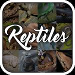 Reptile Animal Encyclopedia 1.1