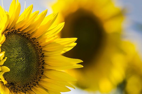Allegro, vivace, solare di PH...C.Collovà