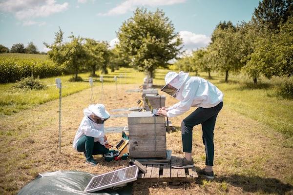 Katharina e Frederic trabalhando em um monitor de colmeia
