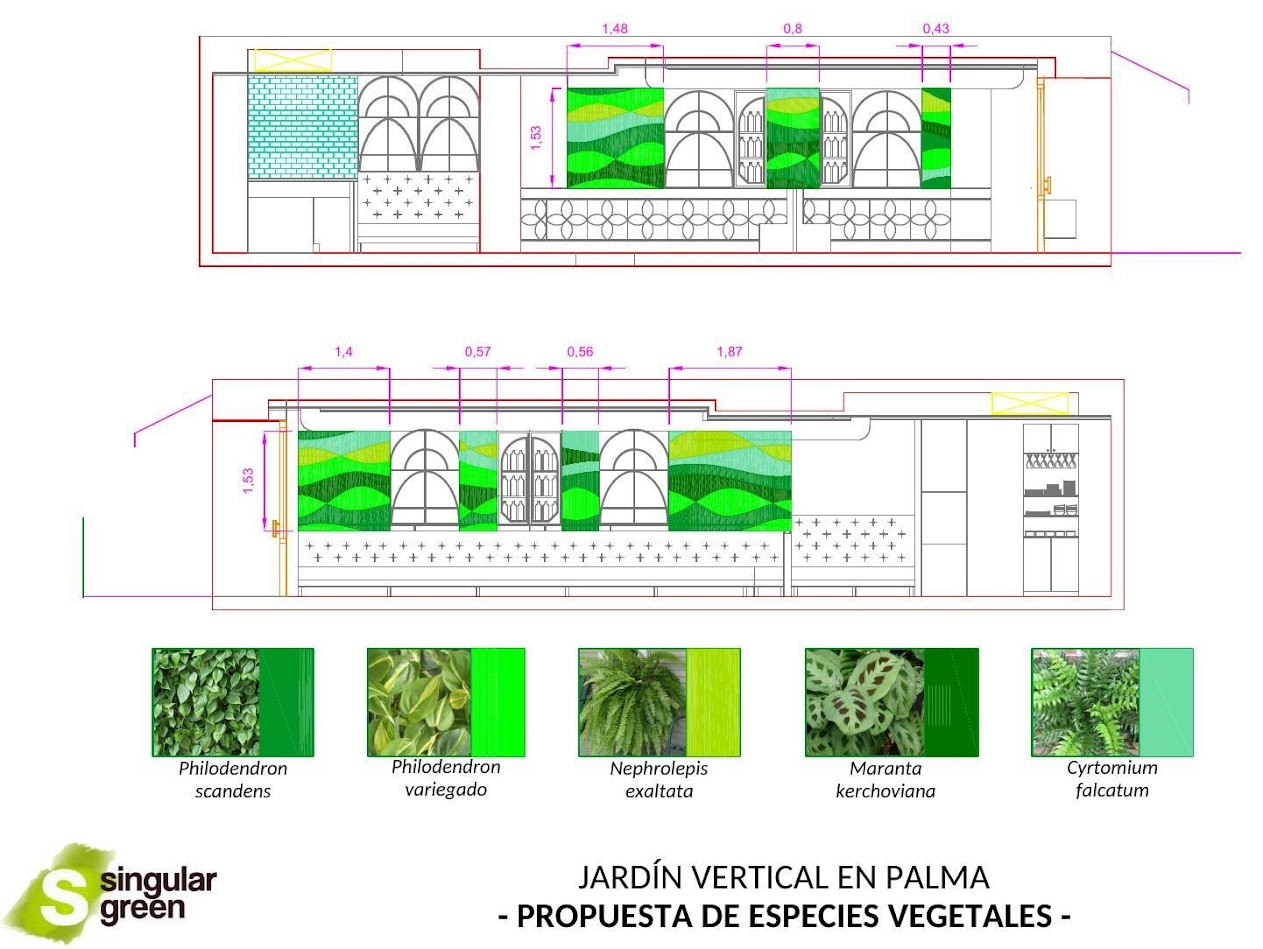Jardines verticales de interior en Mallorca - Diseño