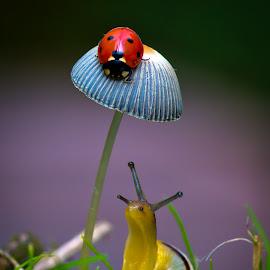 by Darrell Raw - Nature Up Close Mushrooms & Fungi ( Fantasy, Fairies, ColoRiffic, Mystical )