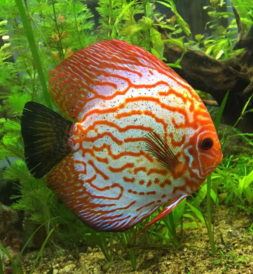 Hi Mobile Snap (iphone 6)Aquarium by Vivek Naik - Animals Fish (  )