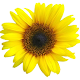 Flower widget (app)