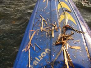 Photo: kajak po odcinku roślinnosciowym wyglada tak