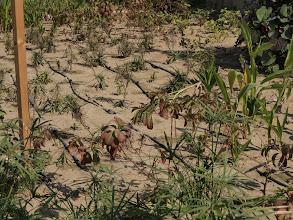 Photo: Grija pentru plante