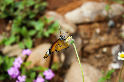 A lonely butterfly! by KarthiKeyan Chandrasekar - Animals Insects & Spiders