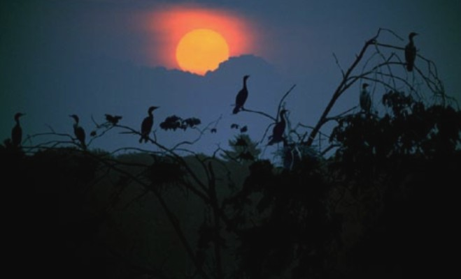 Sleep birds di Sliver