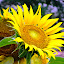 by Tina Banik - Flowers Flower Gardens (  )