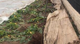 Imagen de uno de los invernaderos afectados por el temporal.